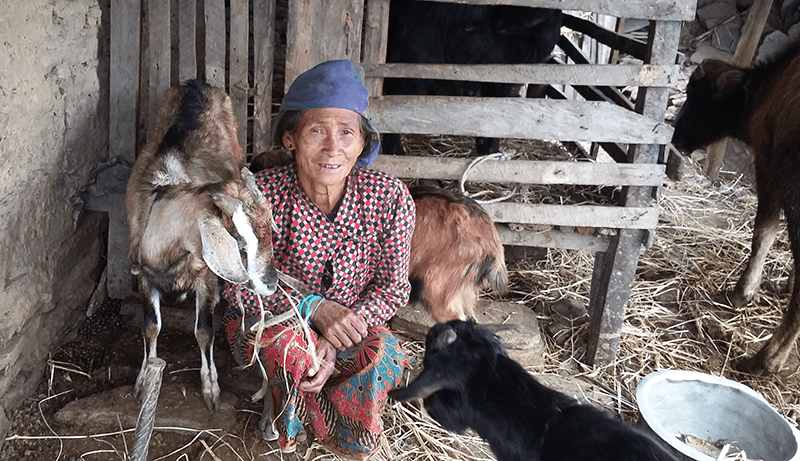 LMI's Goat for Widow campaign provides support and income for widows and their families.
